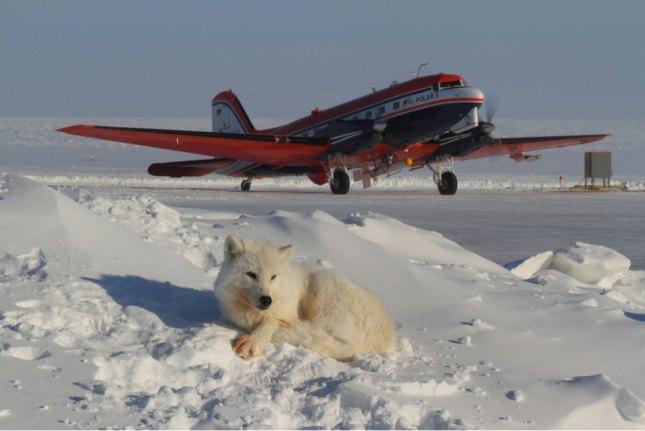 Se derrite el ártico